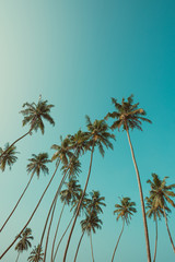 Tall palm trees on tropical beach with clear sky on background vintage color filtered with copy space