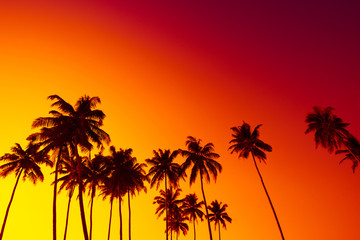 Tropical beach sunset with coconut palm trees silhouettes and sky as copy space