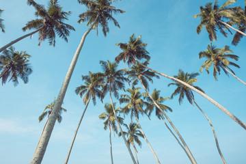 Palm trees retro toned