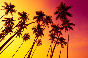 Tropical beach sunset with coconut palm trees silhouettes