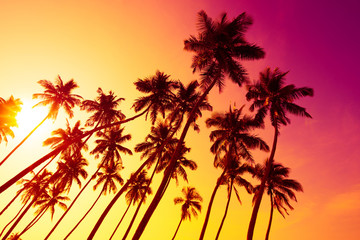 Tropical beach sunset with palm trees silhouettes and shining summer sun