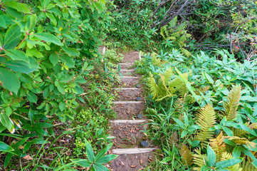 Stone staircase surrounded by green leaves and plants