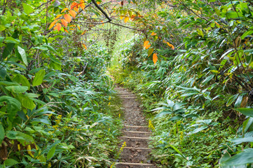 Hiking path, track in forest with green trees