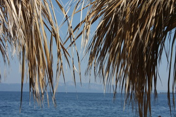 Palm tree and bleu sea - summer background