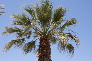 Close up of palm tree against a clear blue sky