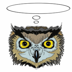 Realistic owl head and thinking balloon