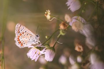 macromondo e farfalla