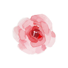 Watercolor rose on a white background