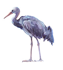 Watercolor single crane animal isolated on a white background illustration.
