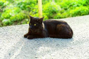 Black young cat warming up at the road in the afternoon.