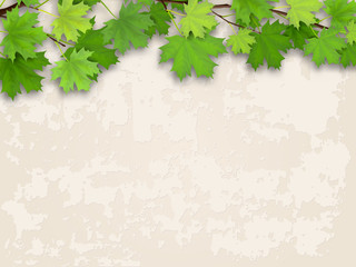 Maple tree branch with green foliage on old plastered wall background.
