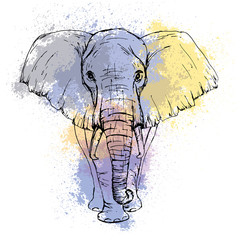 Sketch by pen African elephant front view against the background of watercolor stains