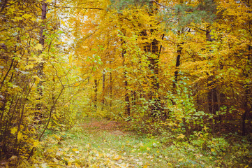 Early autumn forest