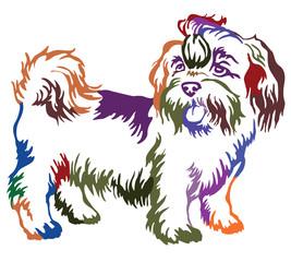 Colorful decorative standing portrait of dog shih-tzu, vector illustration