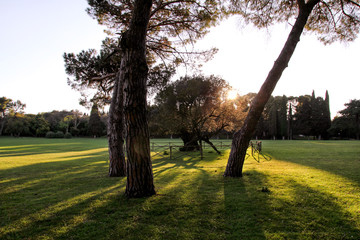 Dawn in olive garden. Old olive tree with amazing sun rays in amazing landscape, natural environment. Beautiful romantic orchard with colorful trees and sunlight. Spring and summer natural background.