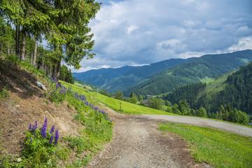 Autriche/paysage autrichien avec sentier de balade