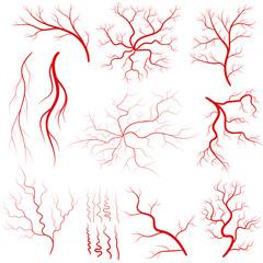 Vein set, Human vessel, eye veins vector