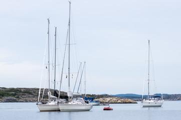 Segelbåtarna