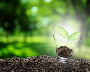 Light bulb with plant growing inside on soil. Concept of conserve environment