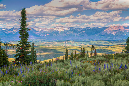 Foreground Wyoming Wildflowers and Sawtooth Mountains