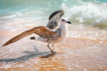 Seagull on a sandy sea shore .