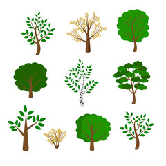 Vector set of trees. Trees on white background