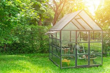 Fototapeta green house in the home garden, planting cactus nursery. obraz