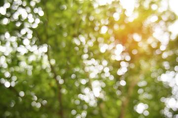 Natural Bokeh green  background with sun light. green bokeh abstract concept