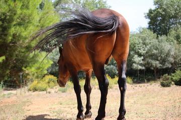 fesses de cheval : humour