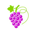 Red grape colorful vector illustration