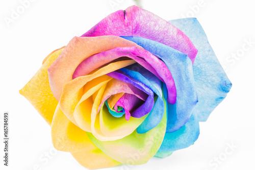 bunte rose in regenbogenfarben isoliert auf wei stockfotos und lizenzfreie bilder auf. Black Bedroom Furniture Sets. Home Design Ideas