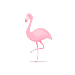 Flamingo bird cartoon vector