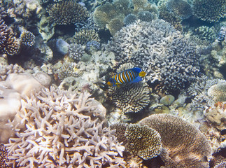 Fishes in corals. Underwater world.
