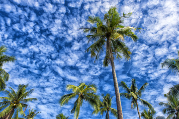 Palms against the blue sky with clouds