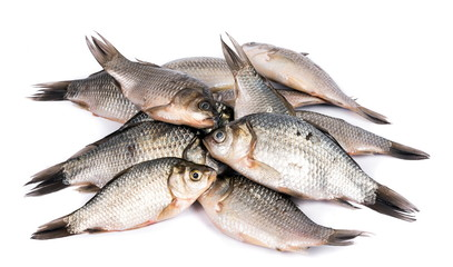 Crusian carp fish closeup