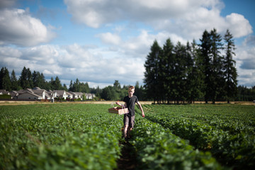 Young boy in field, holding basket of freshly picked strawberries