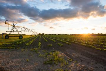 Irrigation machinery on farmland, Michigan, USA