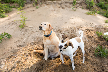 Two dogs on the beach