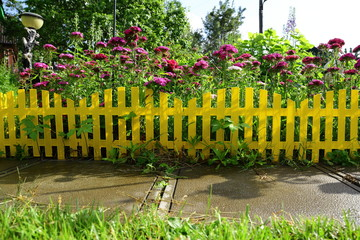 Yellow picket fence with pretty flowers in a yard