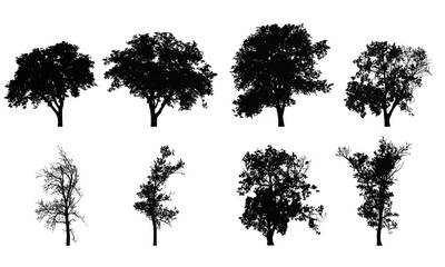 Set of vector realistic silhouettes of deciduous trees, isolated on white background