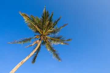 Beautiful palm tree on blue sky background