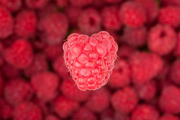 raspberry creative stock image