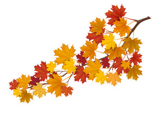Maple branch with yellow and red leaves. Super realistic vector illustration. Plant element for design autumn cards about nature.