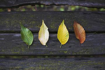 Different leaf colour.