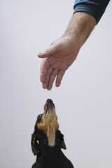 Dog and man's hand