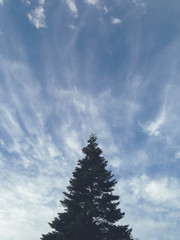 Evergreen tree and sky at dusk