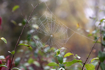 A Delicate Spider Web On An Autumn Morning