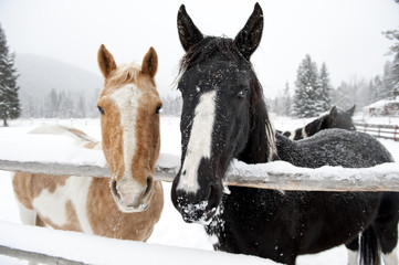 Hey We Are Two Horses