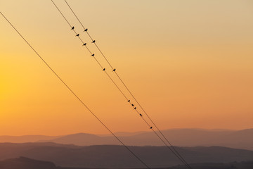 Sparrows On A Wire On Haze Landscape