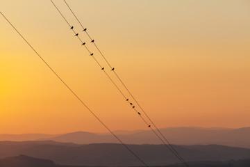 Sparrows On A Wire On Haze Landscape